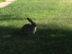 Wildlife outside