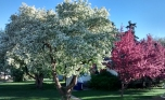 Ring House 2 hiding behind flowering trees