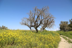 Palestin,-March-2015_2015_03_03_0035-(2)
