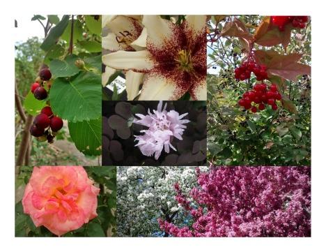 Berries & Blooms_cover